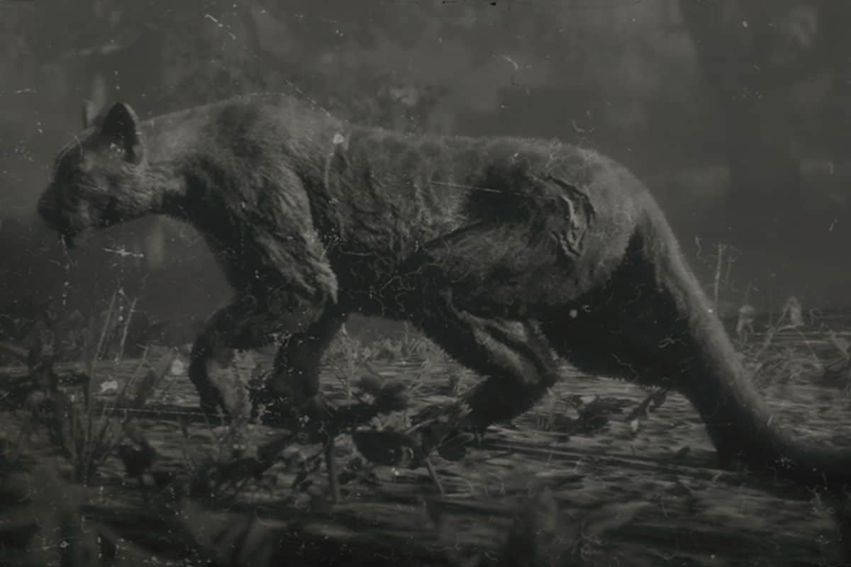 Red Dead Redemption 2 Legendary Panther