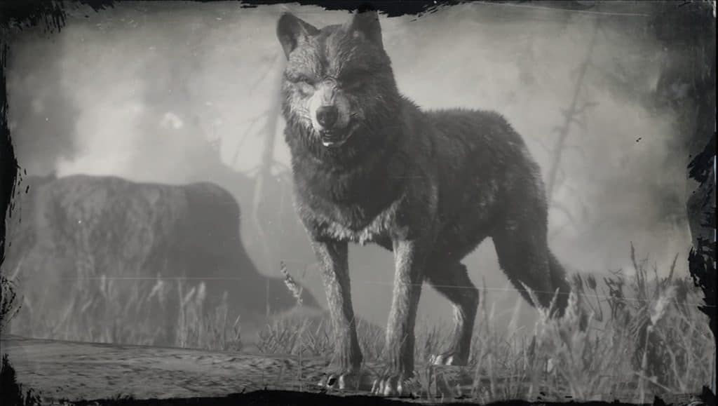 Red Dead Redemption 2 Legendary Wolf Location Guide