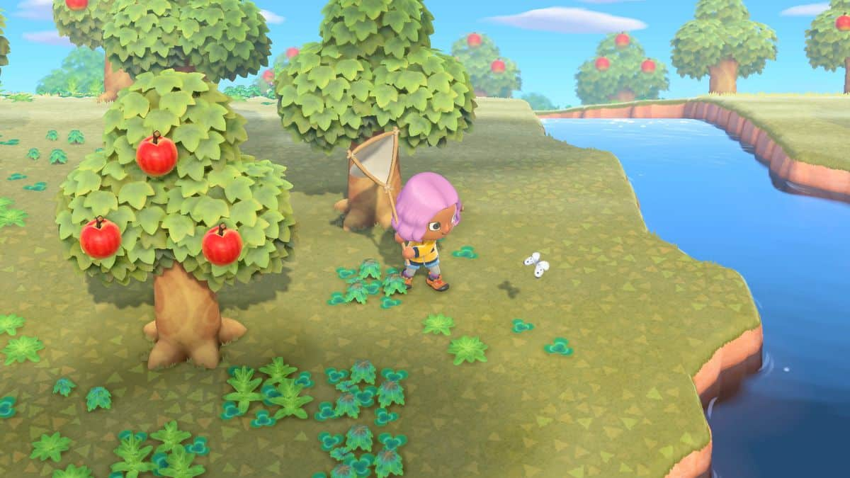 Animal Crossing New Horizons Mystery Island Tour